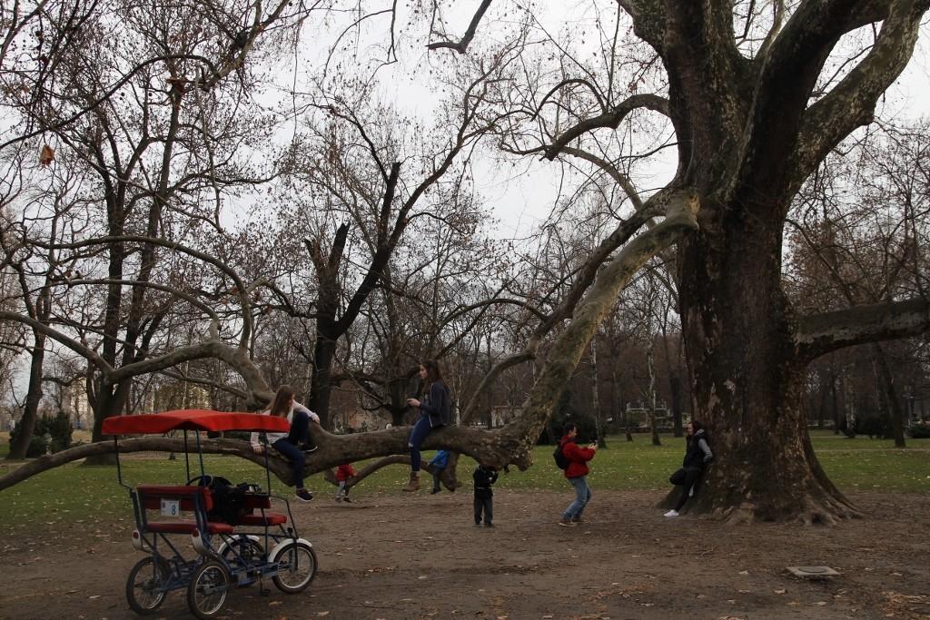 Ağaçların dallarına bile konmuşlar :)
